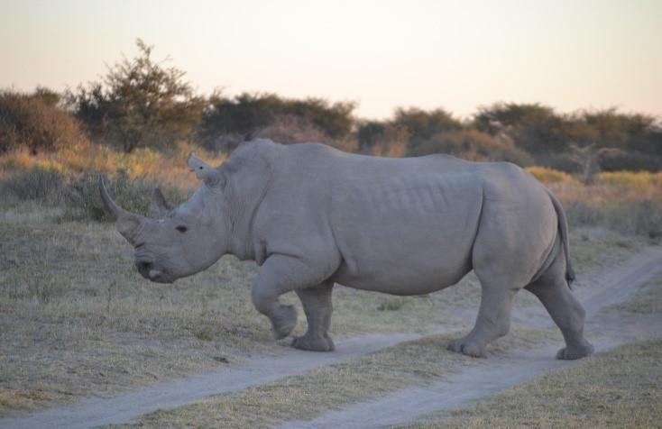 White Rhinoceros Khama Rhino Sanctuary